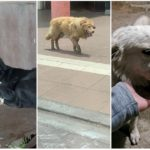 Ultimátum a la Alcaldía de Tunja para dar solución definitiva a animales en condición de calle.